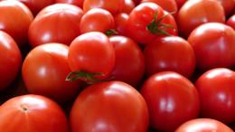 水気耕栽培で育てたトマト