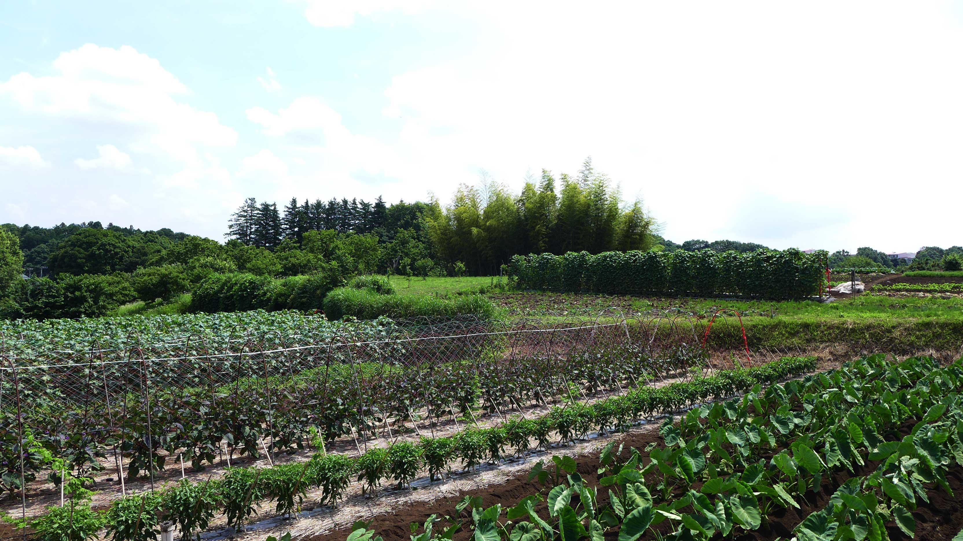 加藤さんの畑