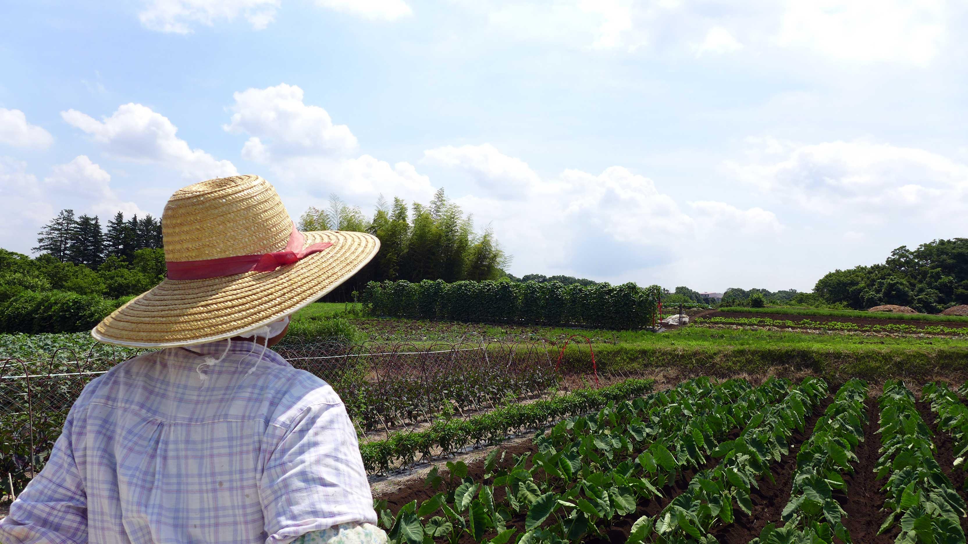 加藤さんと畑