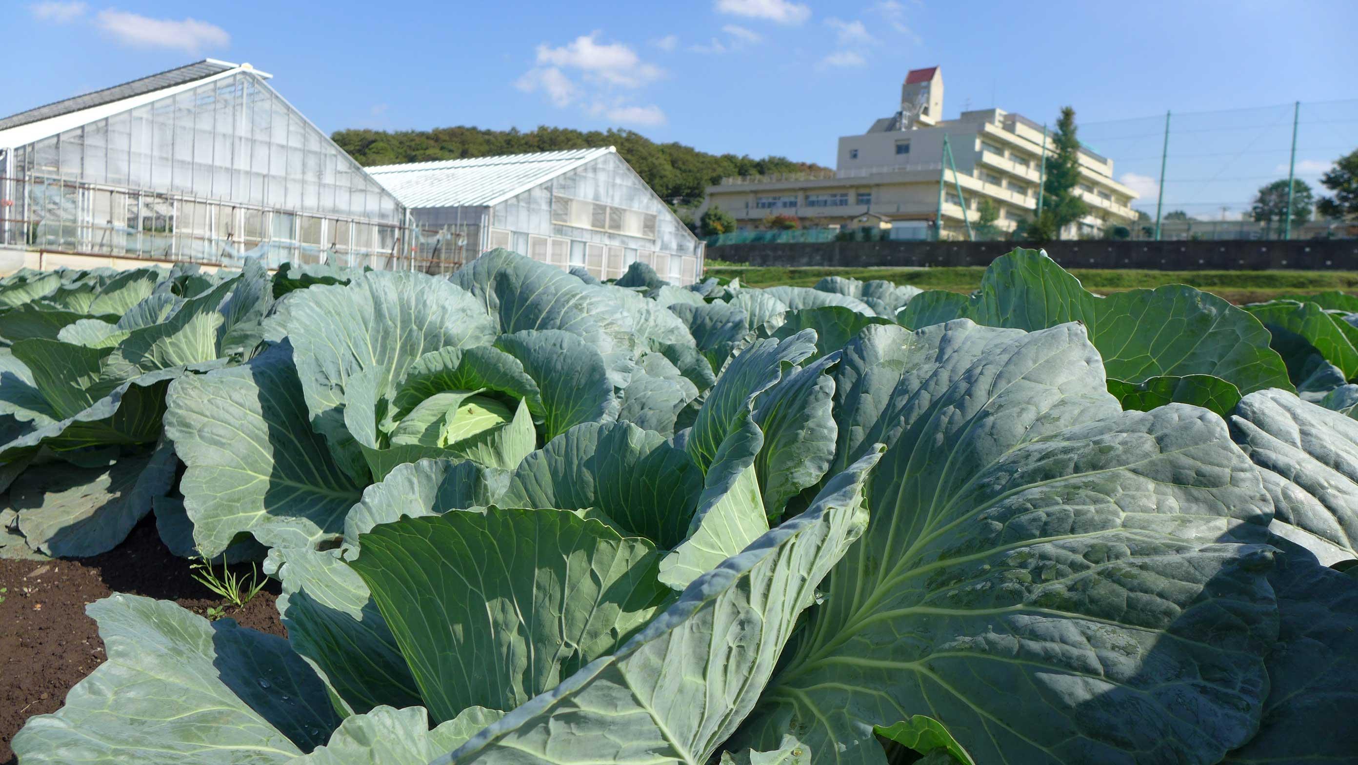 横浜まるだい農園直売所 畑