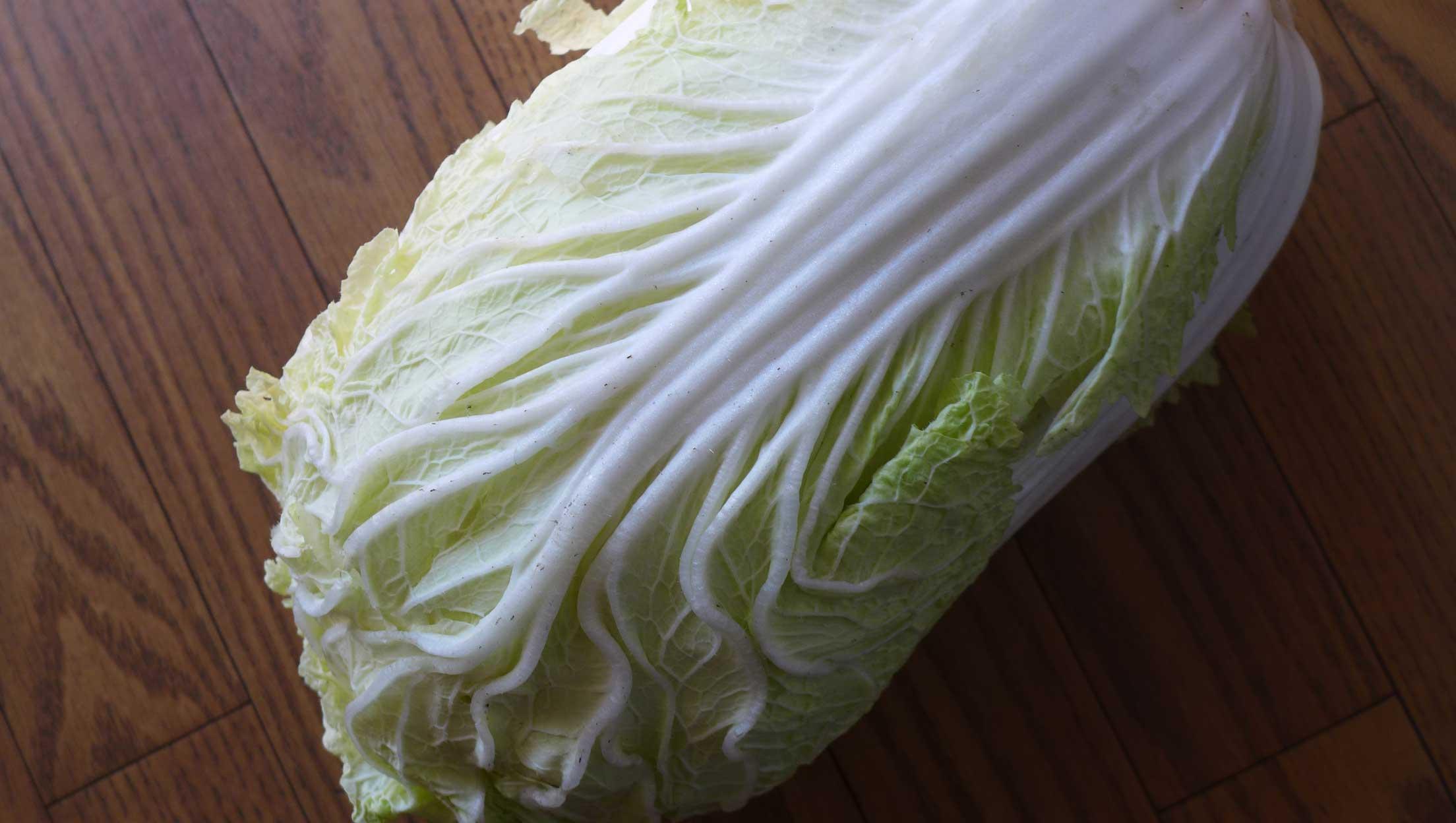 矢島農園 白菜
