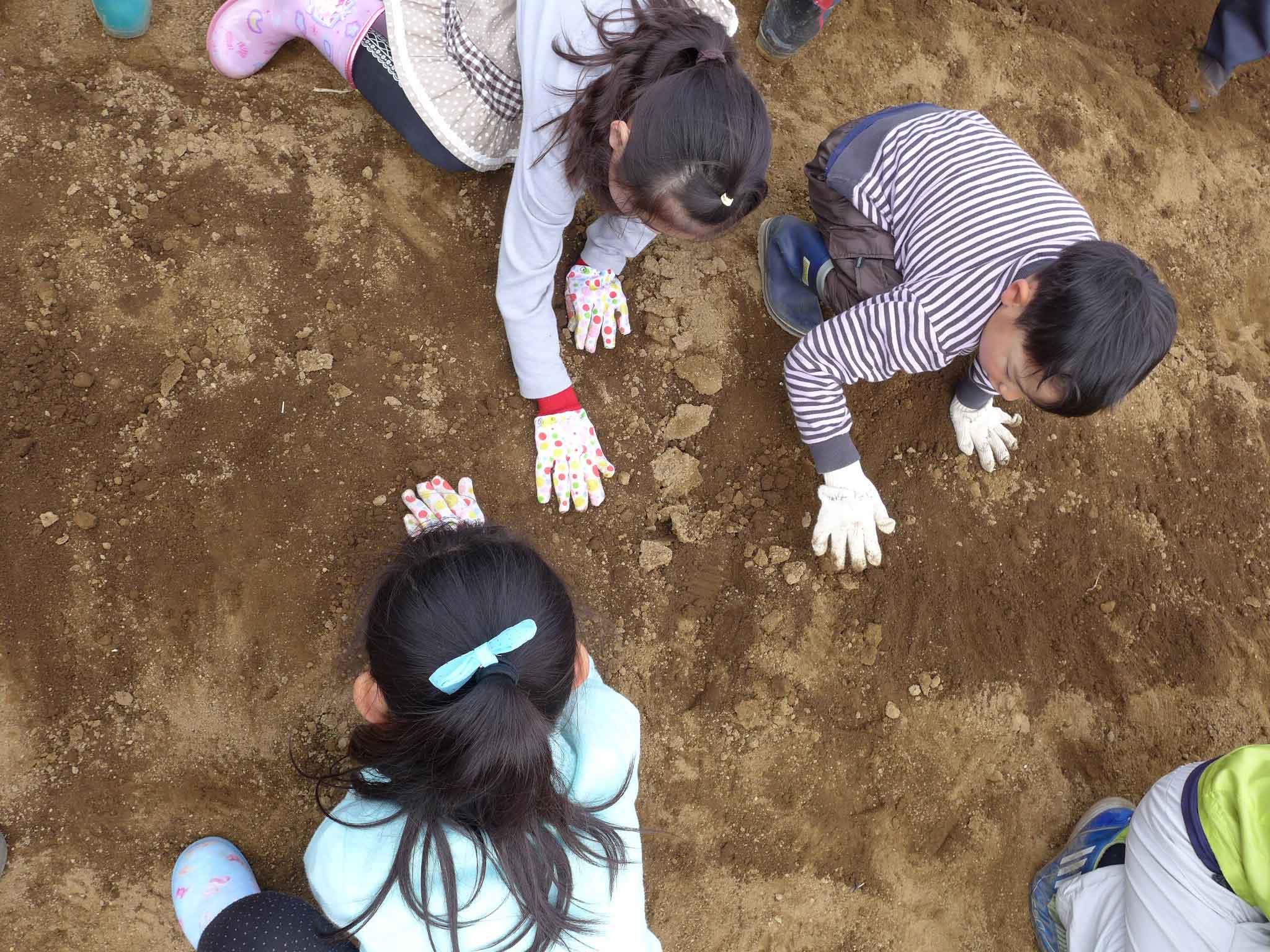 横浜丸大(まるだい)農園 小学生の農業体験