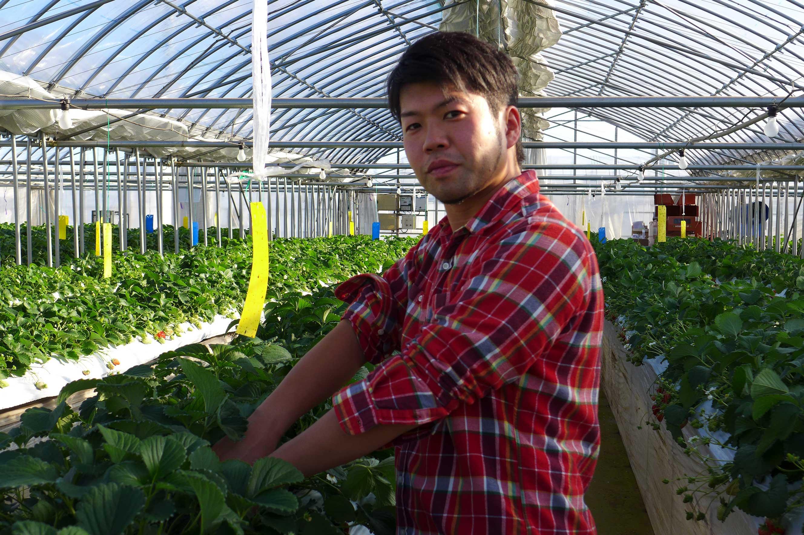 ながさわファーム【横浜市港北区のイチゴと野菜直売所】