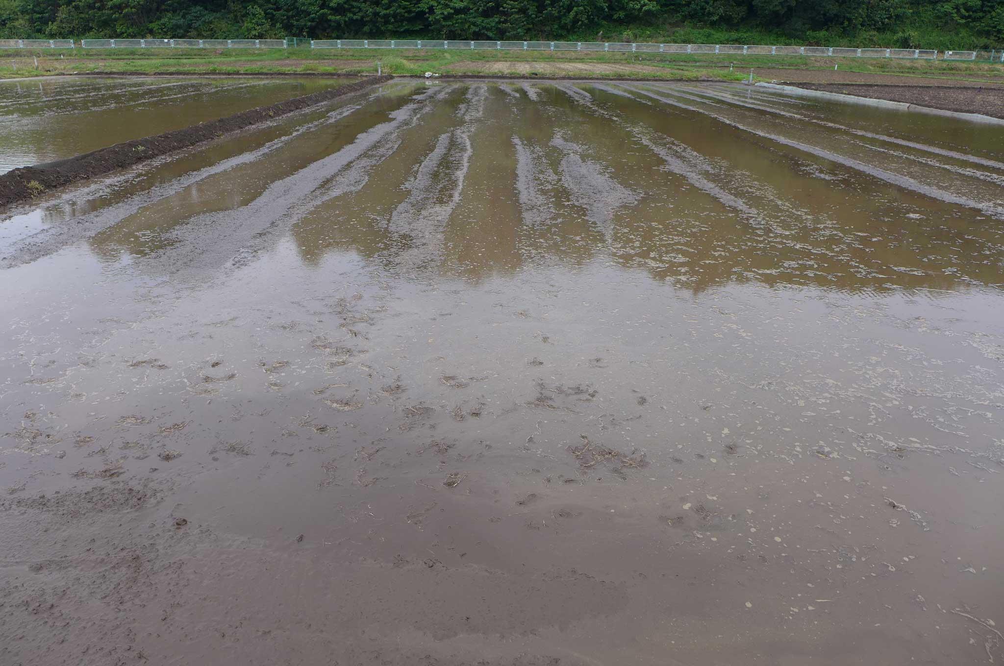 田んぼの代掻き 農業が近くにある生活