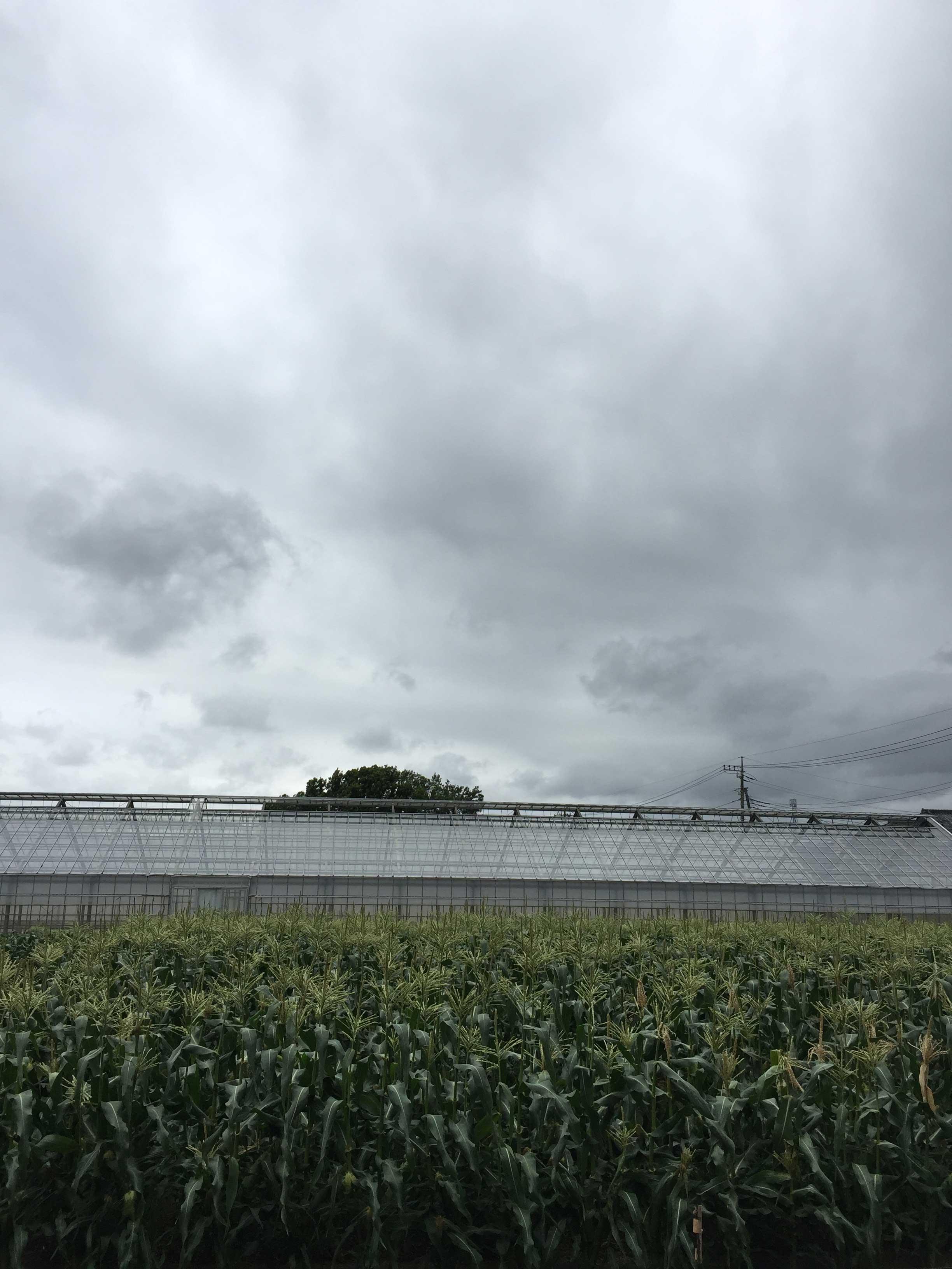 横浜丸大農園の畑