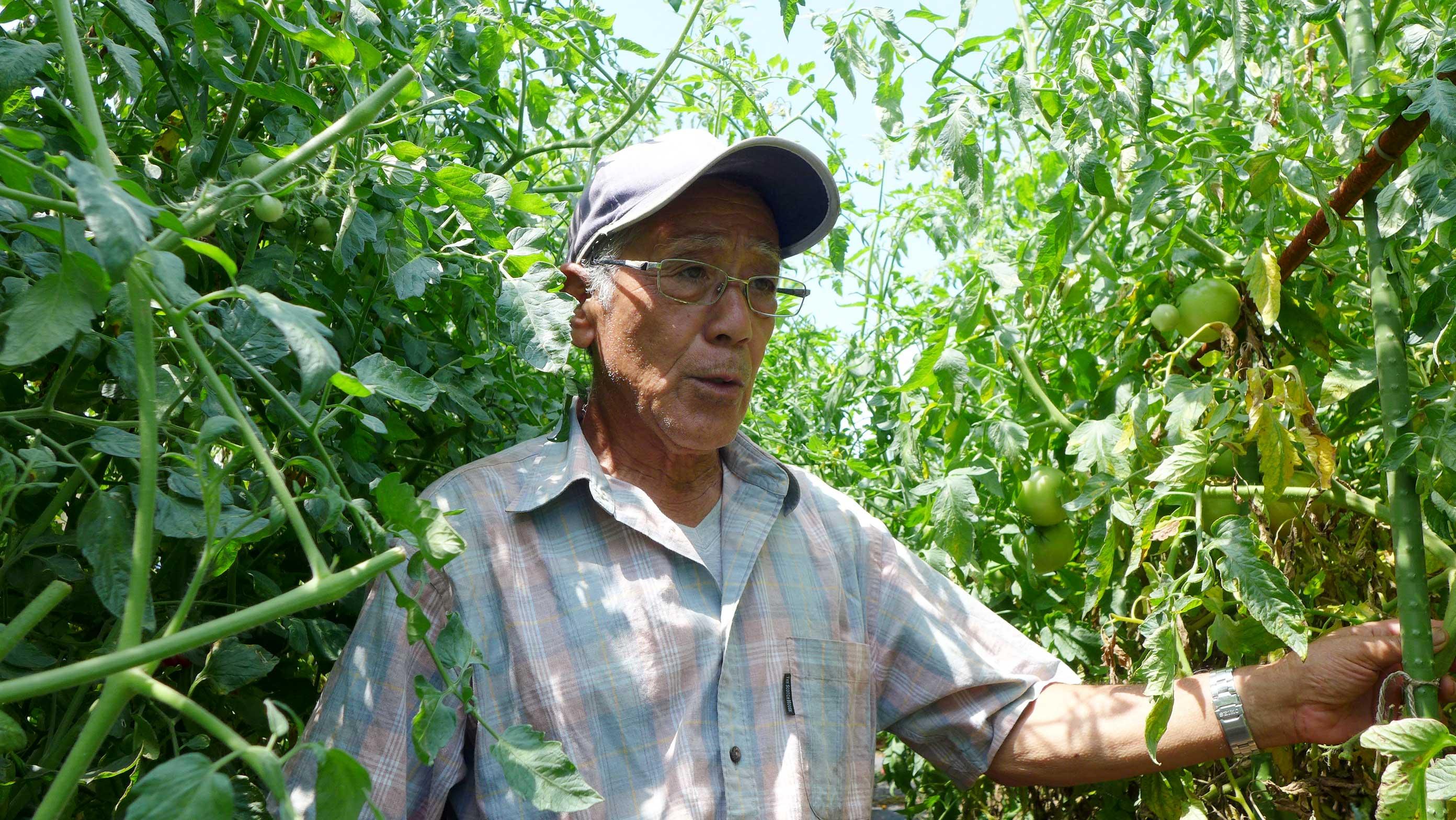 「手を抜かずに丁寧に野菜を育てる」 三村薫農園 – 三村 薫さん