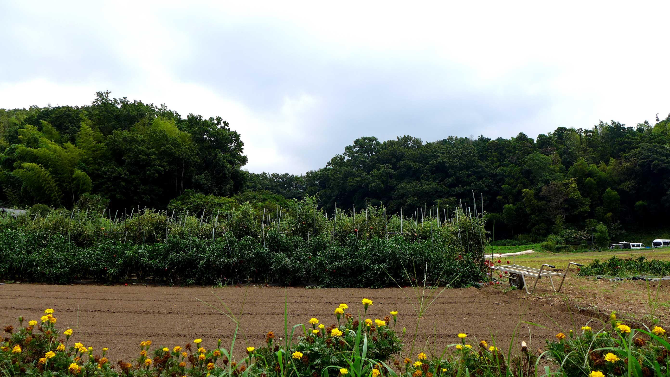 矢島農園 畑