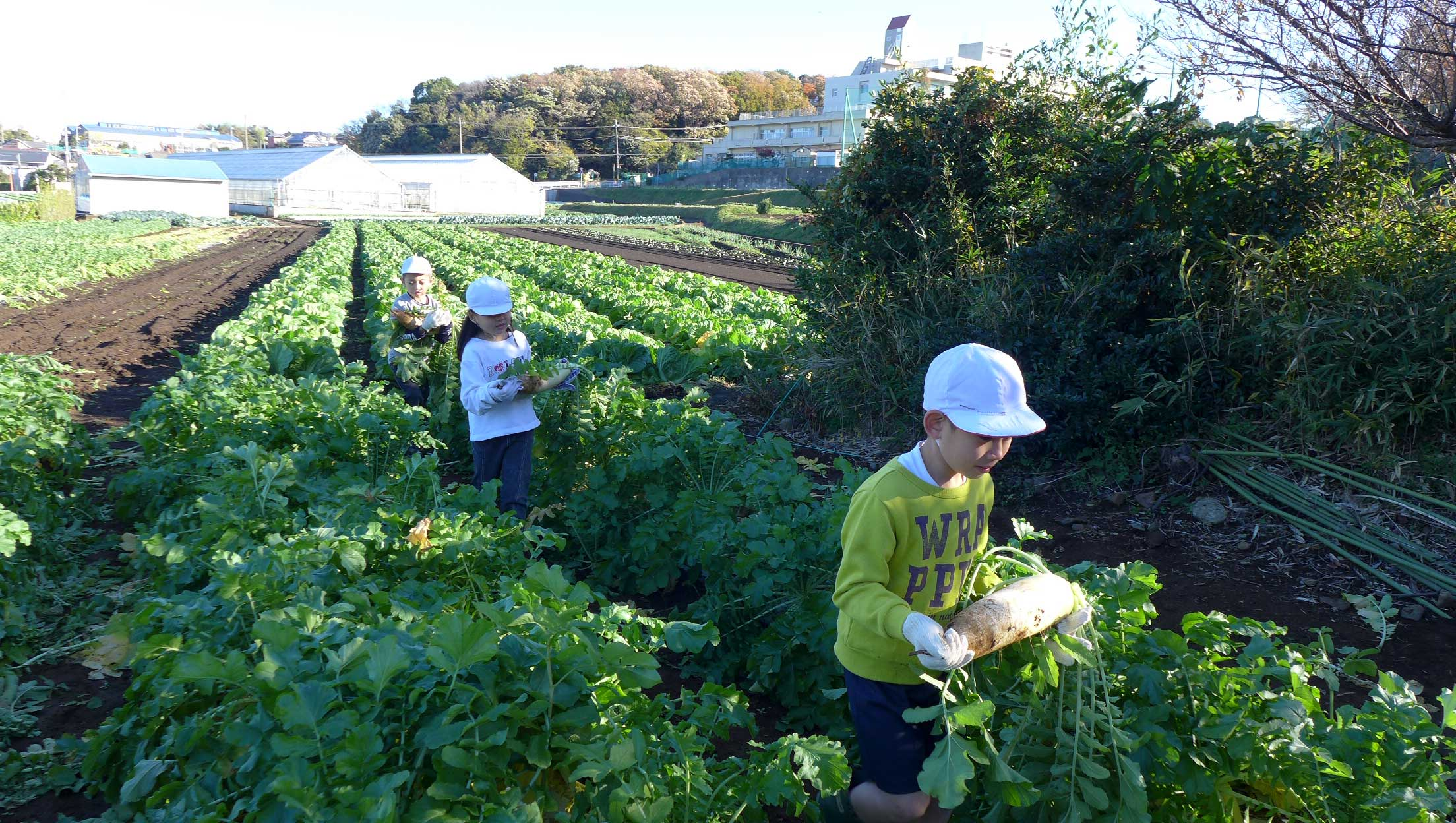 横浜まるだい農園 小学生の農業体験