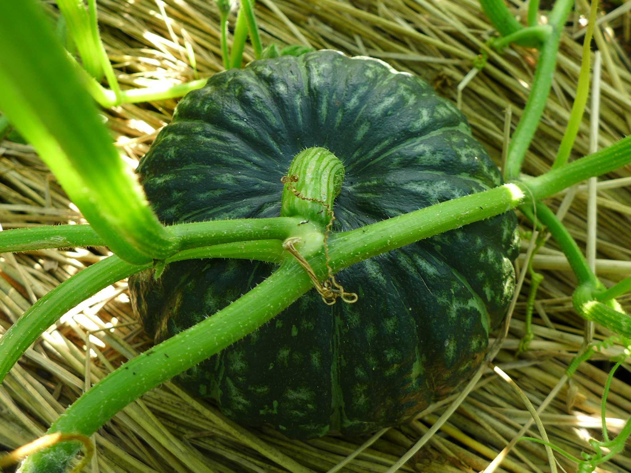 旬の野菜と収穫を待つ野菜がにぎやかな畑