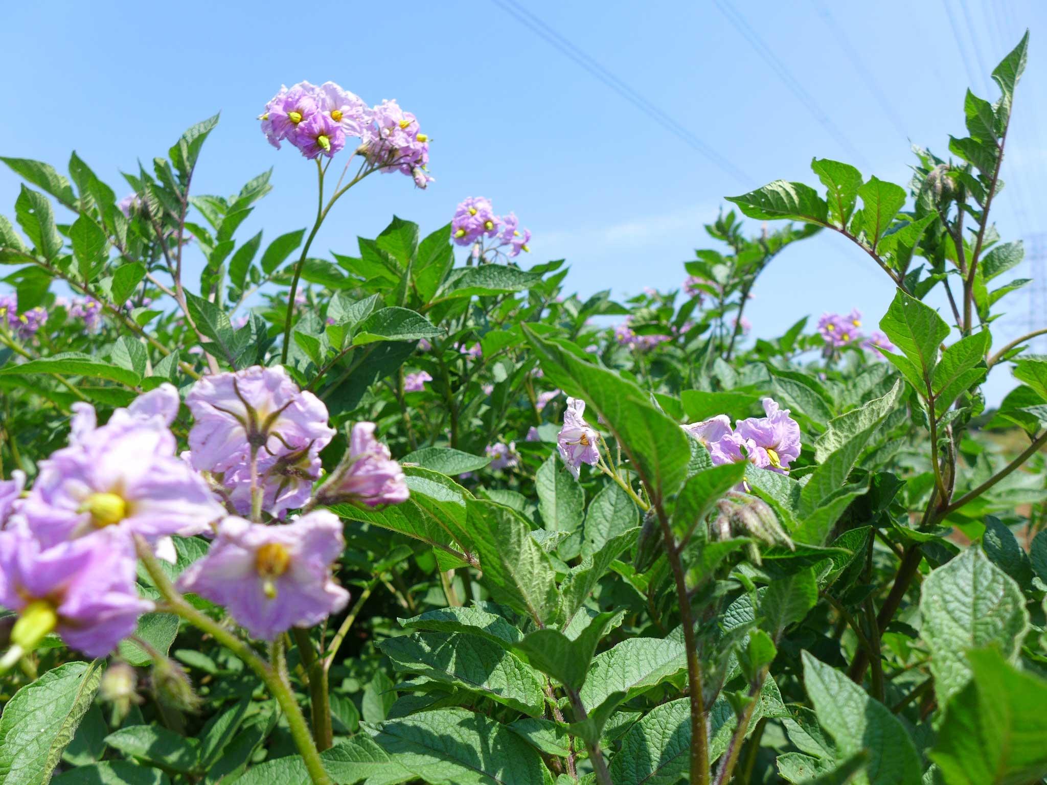 「えんちゃん農場」の春。無化学肥料・無農薬畑の風景