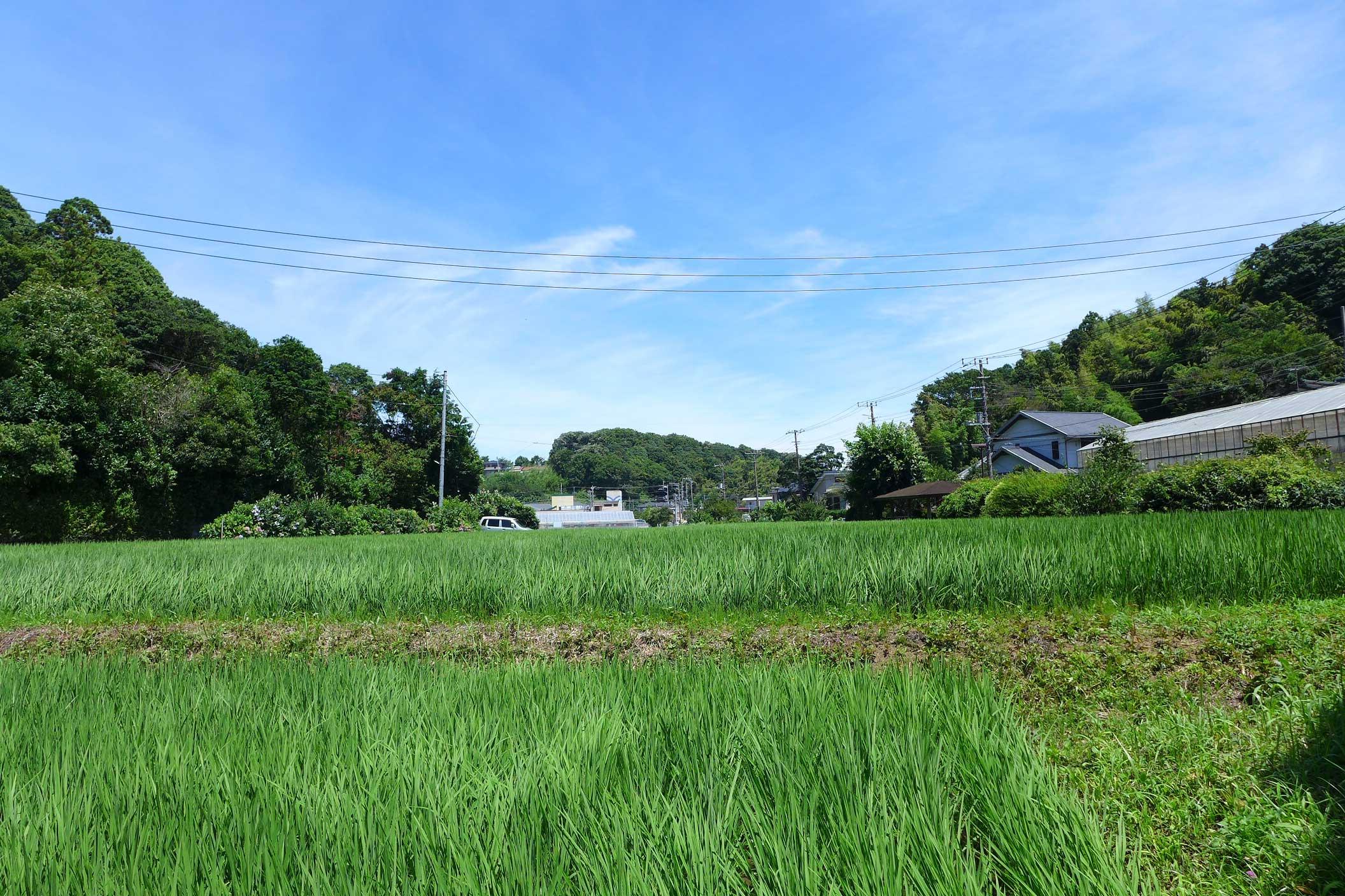 田んぼの風景 - 2015年7月13日