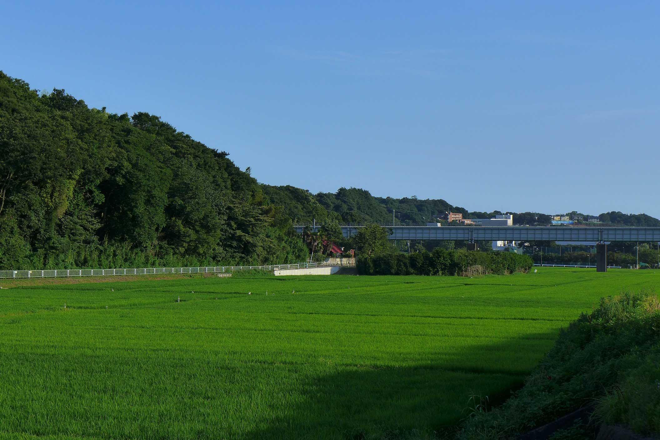 田んぼの風景 - 2015年7月28日