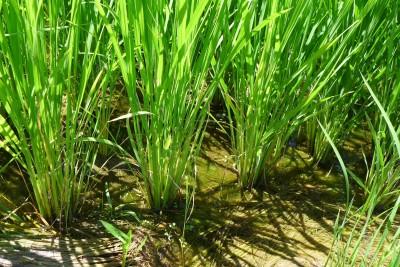 持田広人さんインタビュー:衰退していく農業の現場