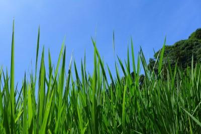 持田広人さんインタビュー:休耕田にしない取り組み
