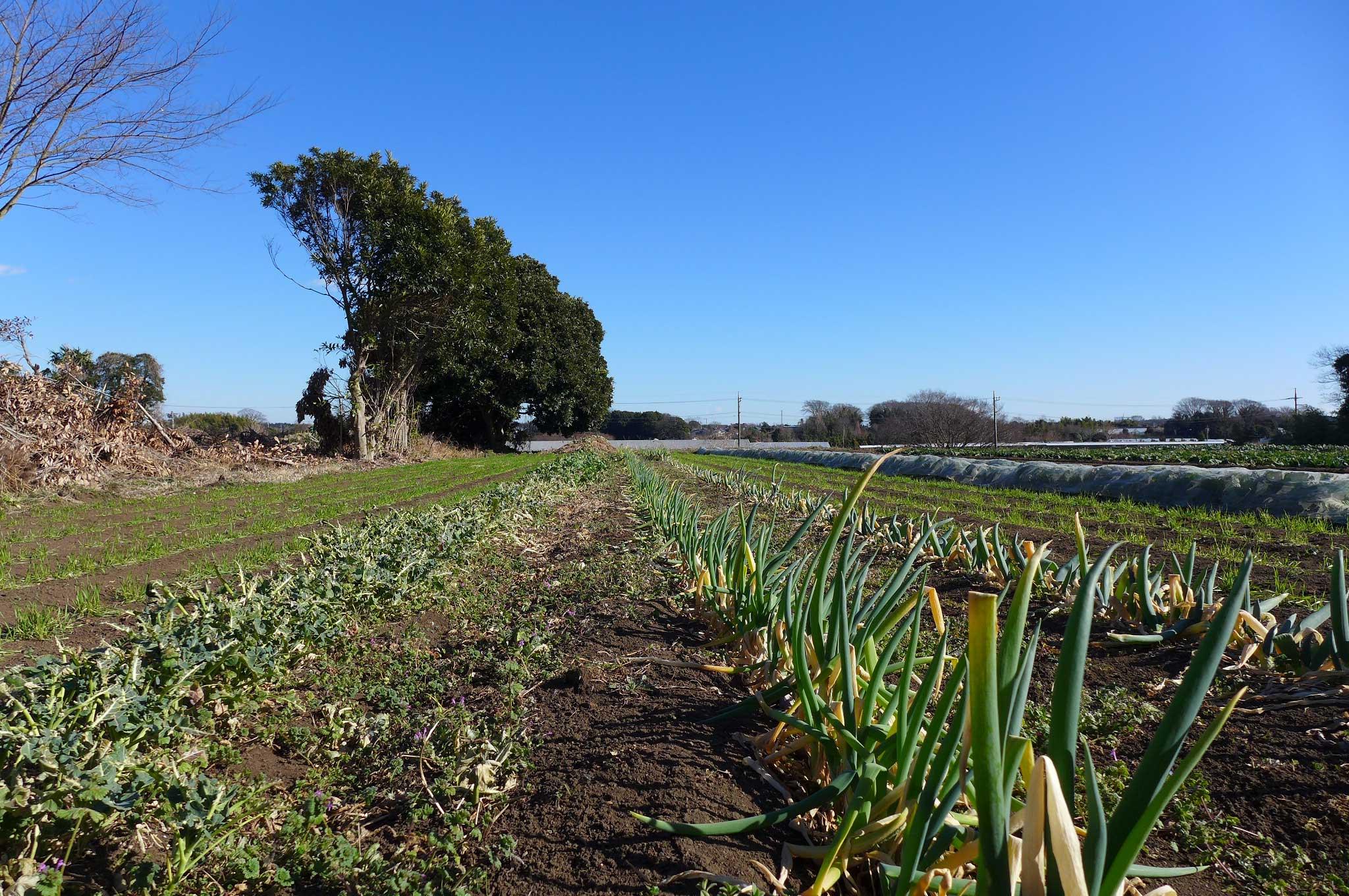 第2回「有機農業での、生産者と消費者の理想的な関わり方って?」相原 成行さん