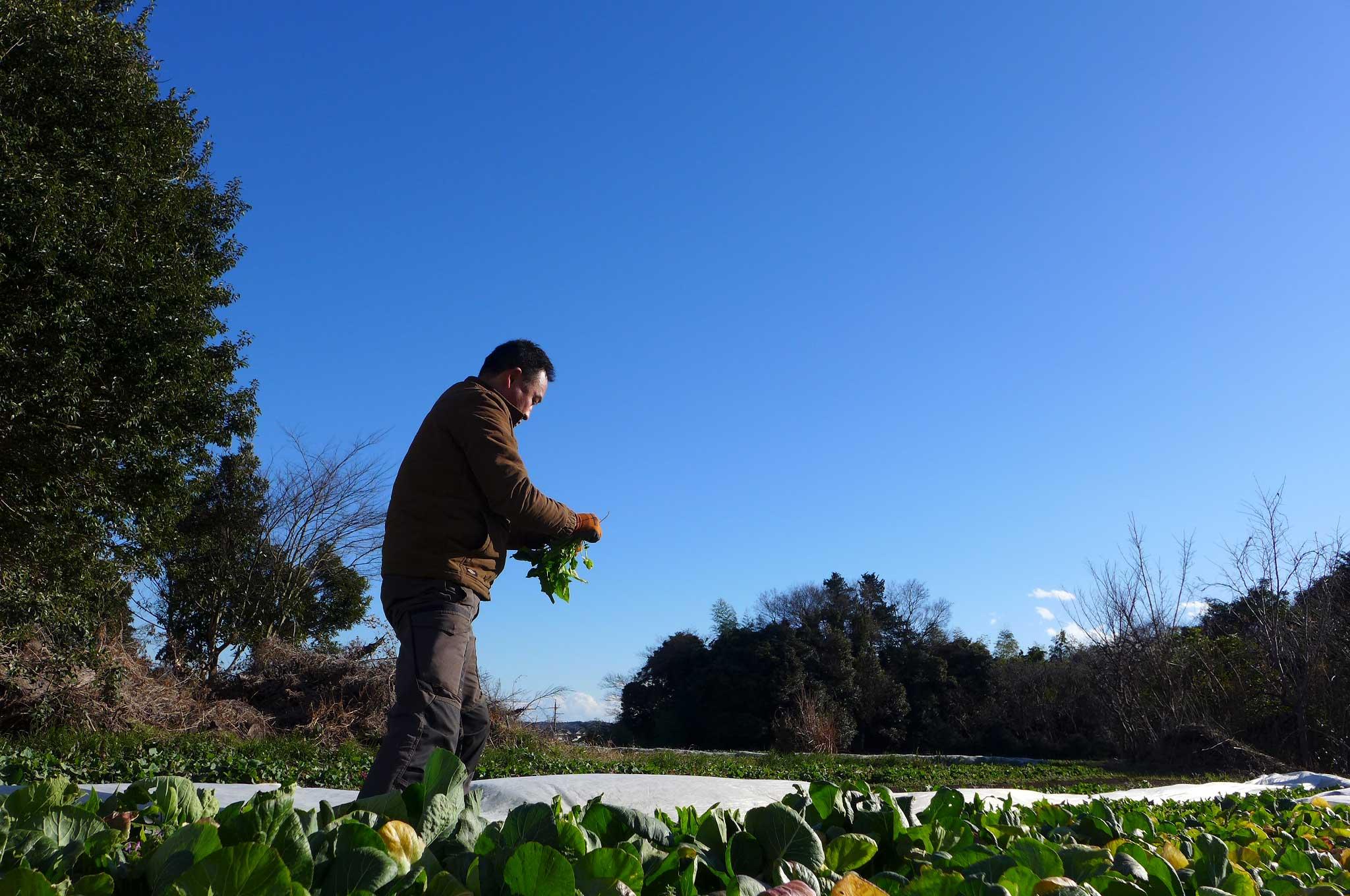 有機農業での、生産者と消費者の理想的な関わり方って?