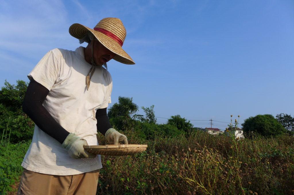 「無農薬、無化学肥料、自家採種。この3つは続けていきたい」鈴木さんちのお野菜 – 鈴木 和夫